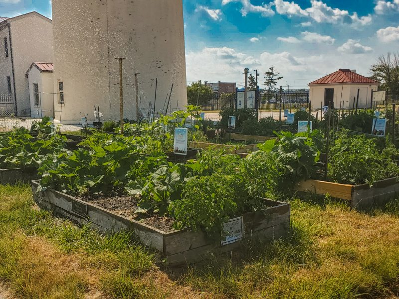 CROPS garden at Absecon Lighthouse